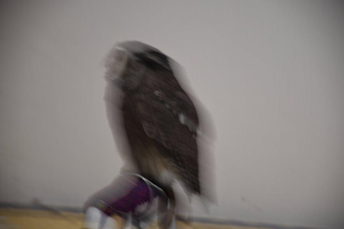 フクロウの残像