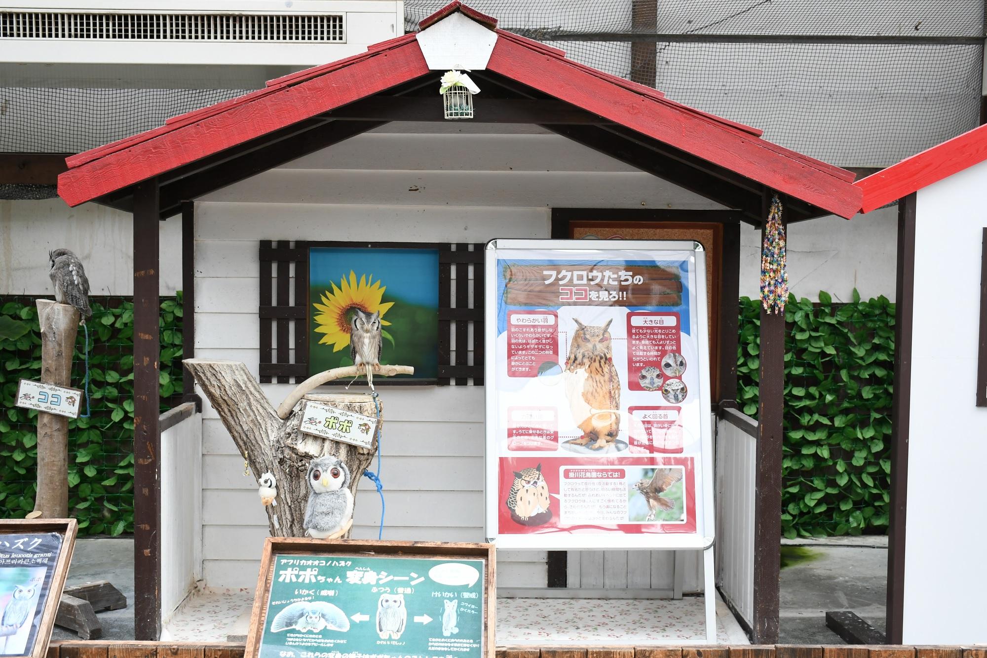 掛川花鳥園のポポちゃんの家