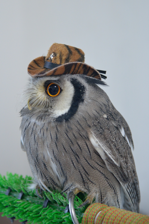 ブラックアウトの物販で購入した帽子キーホルダー
