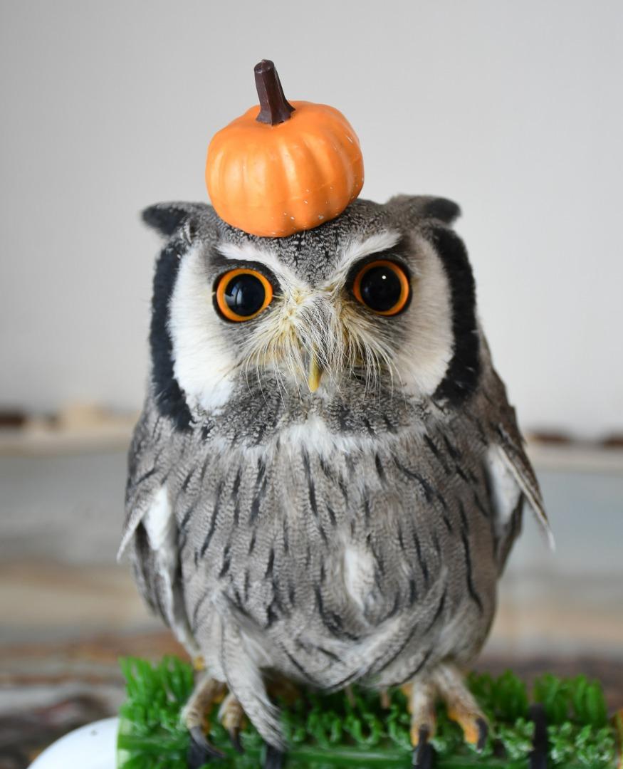 かぼちゃを乗せたフクロウ