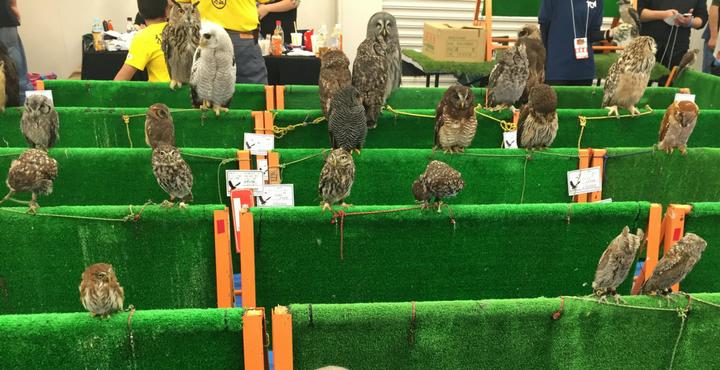 東京レプタイルズワールド猛禽屋