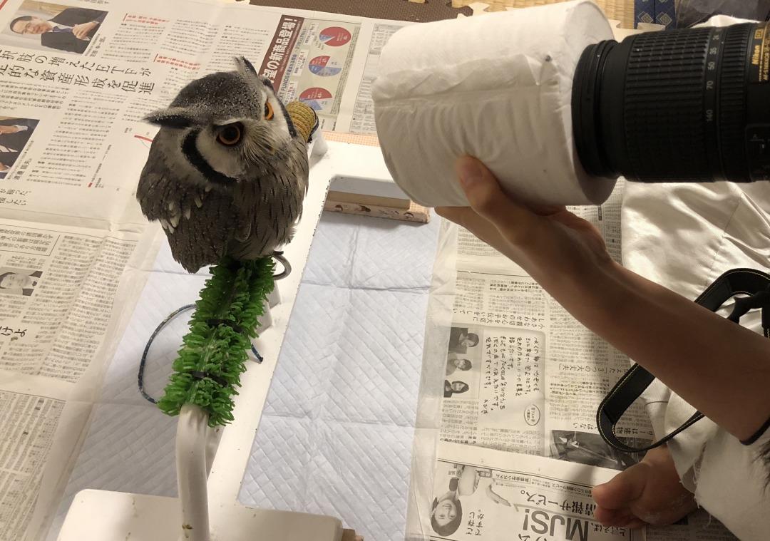 フクロウの写真撮影