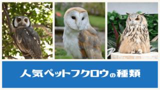 人気ペットフクロウの種類
