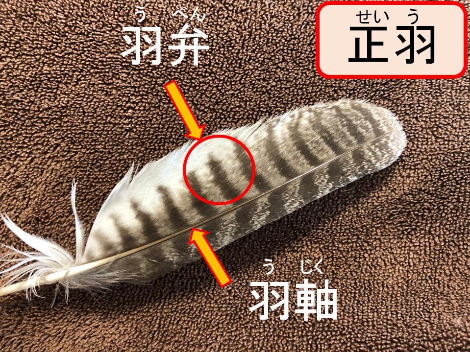 鳥の羽根(正羽)
