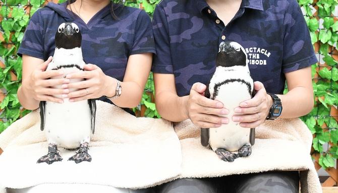 ペンギンのふれあい