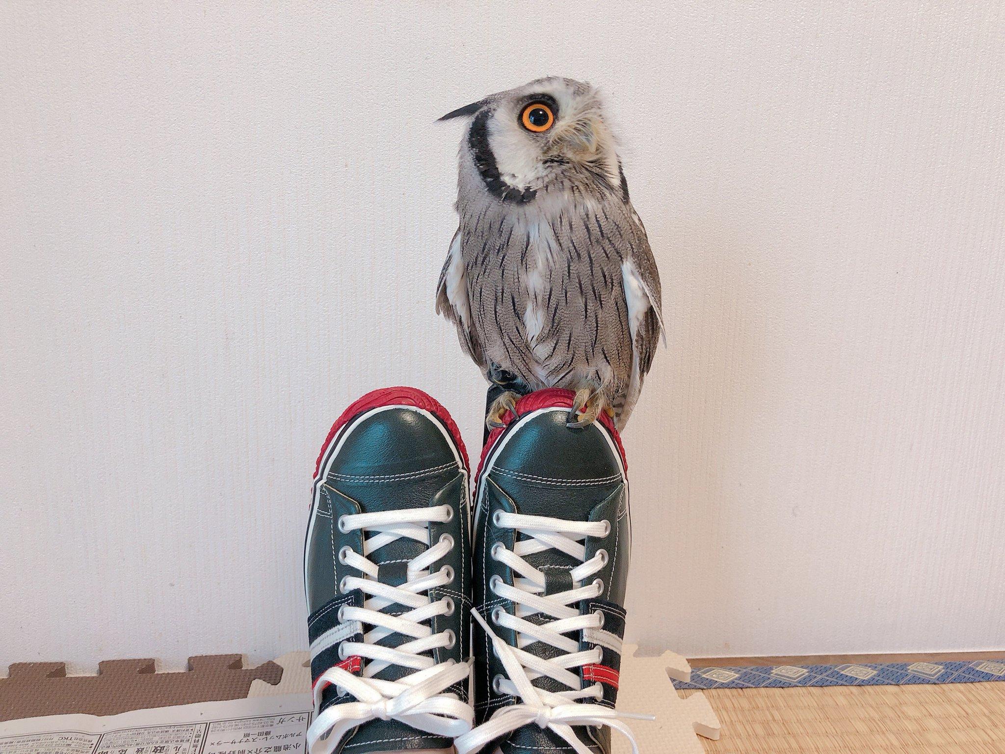 スピングルムーブのカンガルーレザー靴