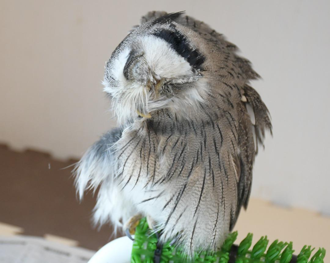 鳥の羽繕い
