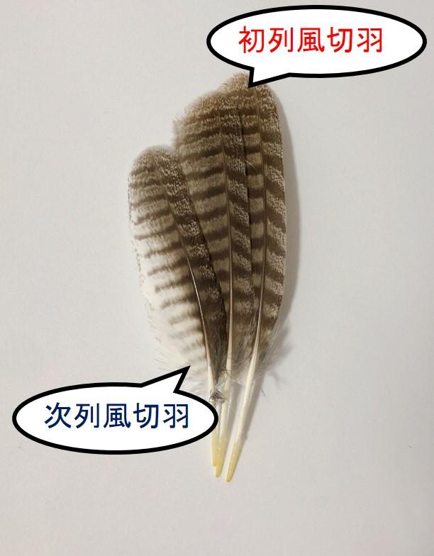 風切羽の名称