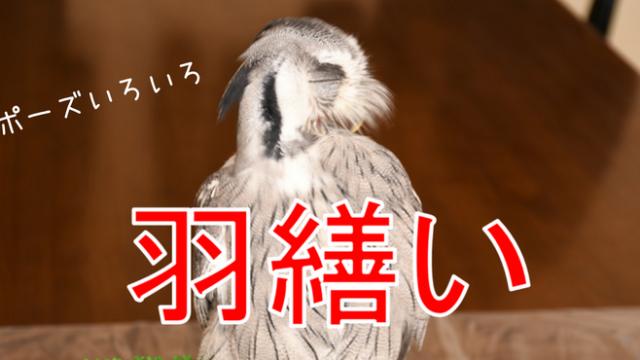 羽繕いのポーズ