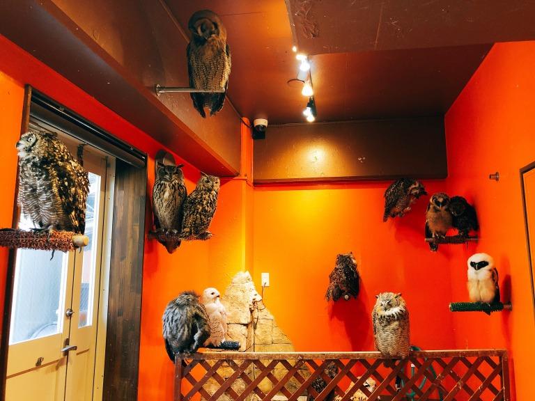 鳥のいるカフェの放鳥部屋