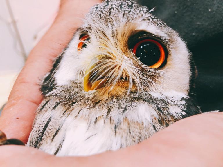フクロウのメンテナンス