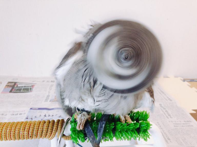 フクロウドリル