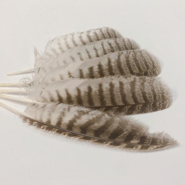 フクロウの風切羽
