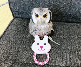 フクロウのおもちゃ