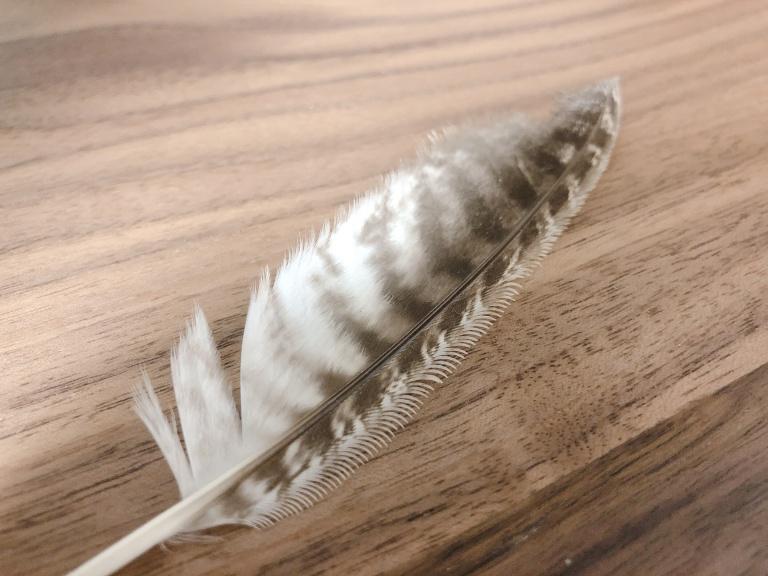 フクロウの風切羽セレーション
