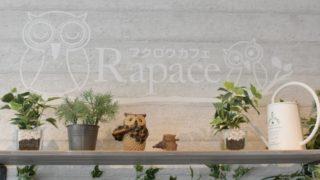 町田のフクロウカフェ「Rapace」