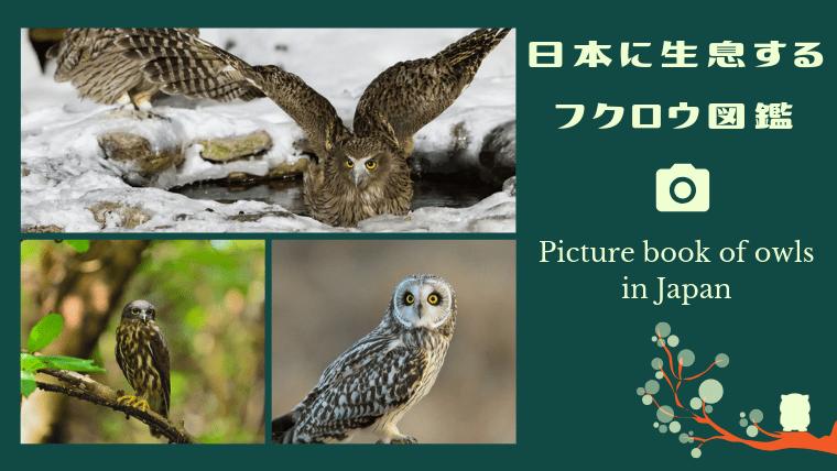 日本に生息するフクロウの種類
