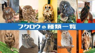 フクロウの種類一覧