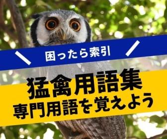 フクロウに関する専門用語集